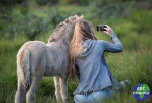 selfi s magarcem