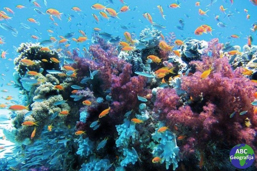 život u oceanima buja