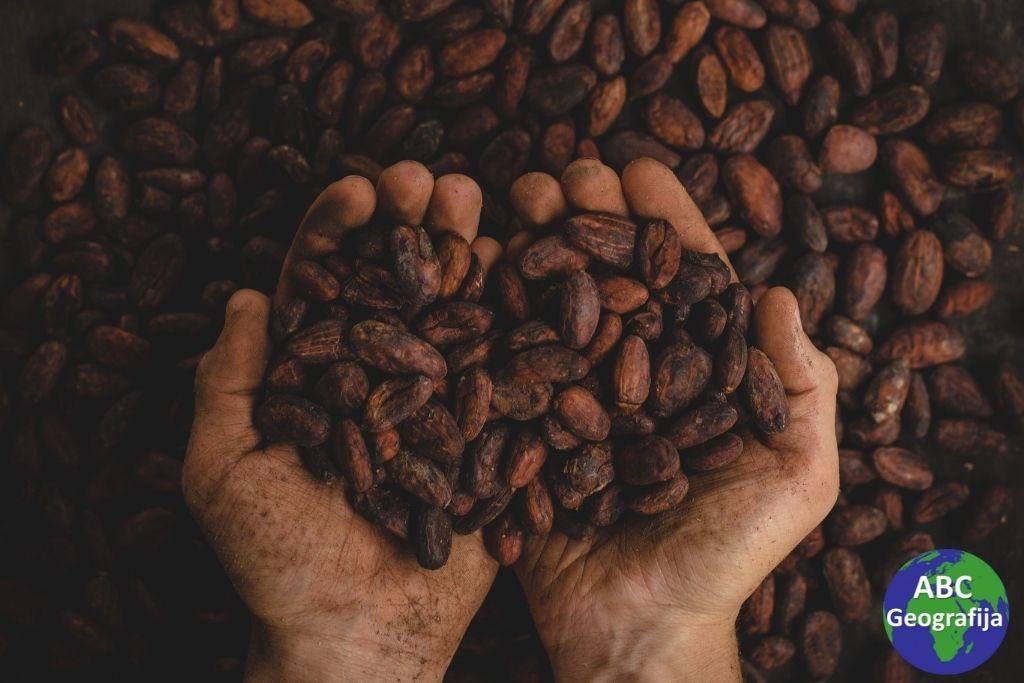 zrna kakaovca