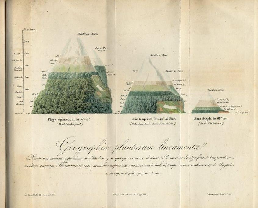 Humboldtova skica iz 1817. godine koja prikazuje geografsku rasprostranjenost biljaka izvor: APS muzej